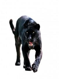 PKB Jaguar Blank - Big Cat Series - Fits Cierra / Sierra Pen Kits Etc.